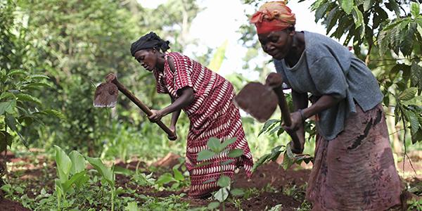femme_agriculture_afrique_trt